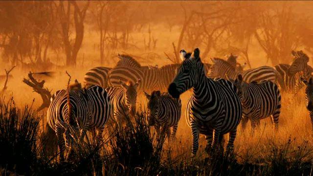Serengeti Video 3