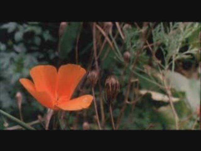 Schmetterling und Taucherglocke Video 4